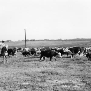 Farm and Home- Tours--New Animal Husbandry farm