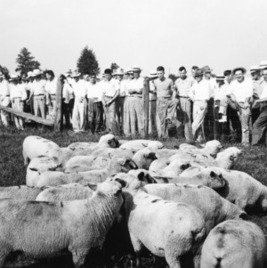 Farm and Home: Tour at Animal Husbandry Farm looking over sheep