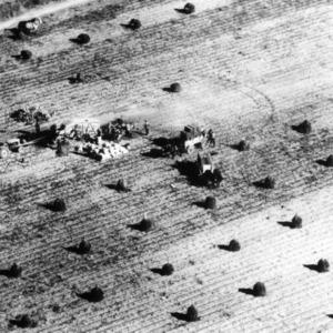 Aerial view of peanut harvest