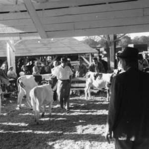 Dairy Cattle Judging at NC State Fair