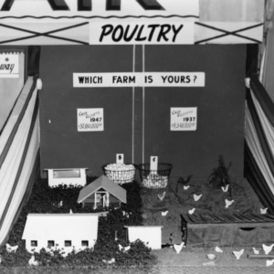 Poultry exhibit at NC State Fair
