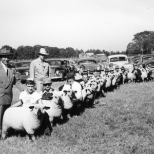 Sheep Class at NC State Fair