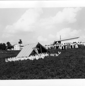 Chicken demonstration at A&T farmers conference, 1951