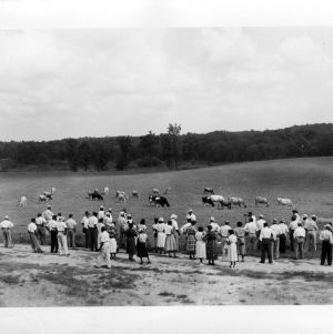 Cattle demonstration at A&T farmers conference, 1951