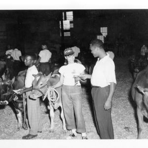 African American Dairy Cattle show in Greensboro