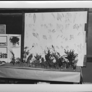 Farm and Home Week: Buncombe County Exhibit