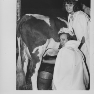 Crowned girls with cow at Statesville, N.C. dairy show