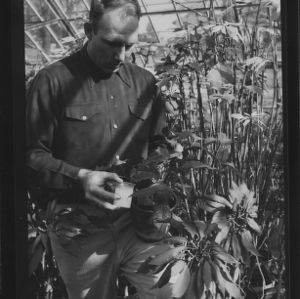 Charles L. O'Bryant and Poinsetta in green house, February 1954