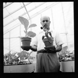 Dr. J. N. Sasser at work in greenhouse