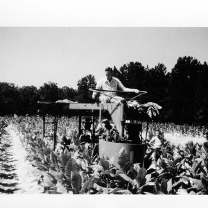 Dr. Bill Splinter operating tobacco harvester