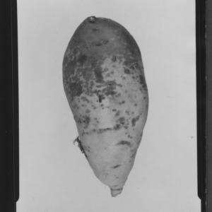Black skin on sweet potato
