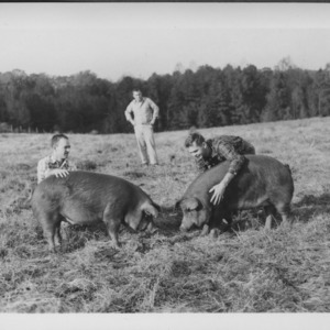 Dr. Stewart and others with swine in field
