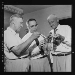 Entomologist professors examining insect pest-ridden plant
