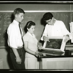 4-H Club Week: Beekeeping Winners; Left to right: Rudolph King, Sylvia King, Sitton Allison; Rudolph King, Sylvia King are being shown, by Sitton Allison, a queen cell in a frame of Bees