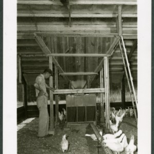 Pickles Poultry farm in Stanly County; Automatic feed mixing equipment