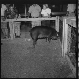 Individual Breed Champions; Second N. C. Market Hog Show, Fair Grounds