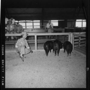 Breed Champion Pens; Second N. C. Market Hog Show (Fair Grounds)