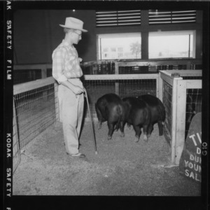 Breed Champion Pens; Second N. C. Market Hog Show (Fair Grounds)
