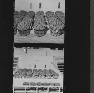 N. C. State Fair: Sweet potato exhibit