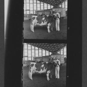 N. C. State Fair: American Dairy Princess Shari Lewis with grand champion Gurney female
