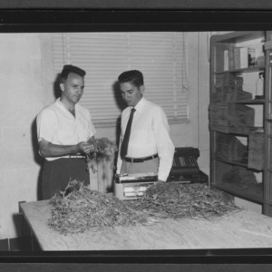 Manuel Curbelo and Dr. D. S. Chamblee with plants