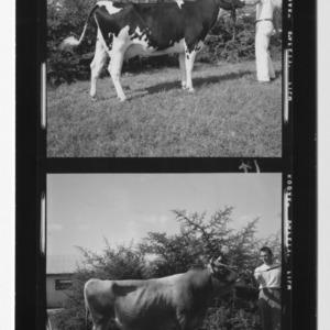 N.C. State Fair, Dairy Champions