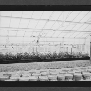 Greenhouse experiment on lighting