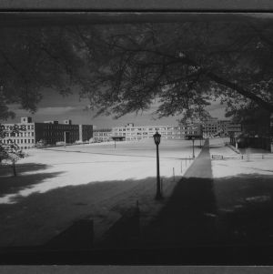 Campus Scene: Williams and Gardner from front of Library