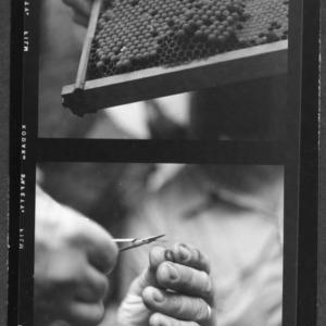 Beekeepers meet at Burgaw, NC