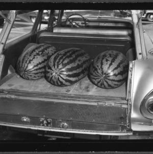 100-pound watermelon at Farmers Market