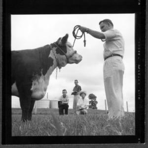 Livestock judging contest