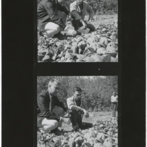 Two men inspect tobacco plant bed