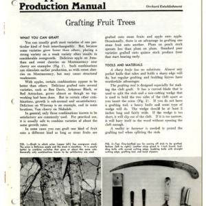 N.C. apple production manual: grafting fruit trees (Agricultural Extension Publication 305)