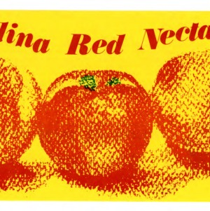 Carolina red nectarine pamphlet (Agricultural Extension Publication 316)