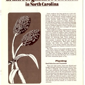 Grain sorghum production in North Carolina (Agricultural Extension Publication 318)