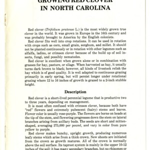 Growing red clover in North Carolina (Agricultural Extension Publication 334)