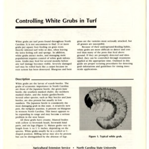 Controlling white grubs in turf (Extension Folder No. 366)