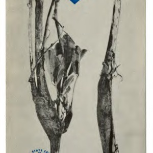 The alfalfa stem nematode (Extension Folder No. 133)