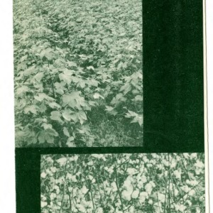 Cotton Defoliation (Extension Folder No. 214, Revised)