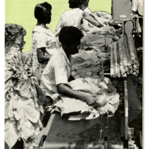 Will tobacco tying machines pay? (Folder 254)